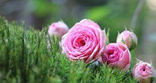 что делать на даче в июле: цветник
